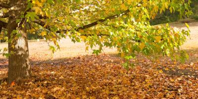 Autumn Colour Margaret river photography