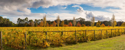 Margaret River Vineyard photography