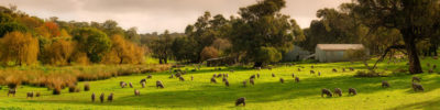 Cape Naturaliste Sheep Farm Dunsborough photo