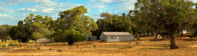 Cape Naturaliste Sheep Farm photography