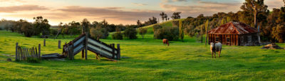 Ferguson Valley Farm photography