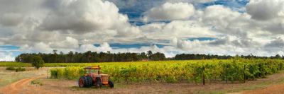 Vineyard Margaret River image