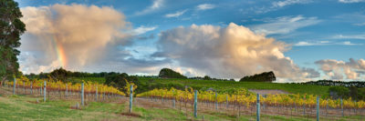 Vineyard Margaret River landscape photography