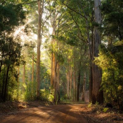 Pemberton Forest WA landscape photography