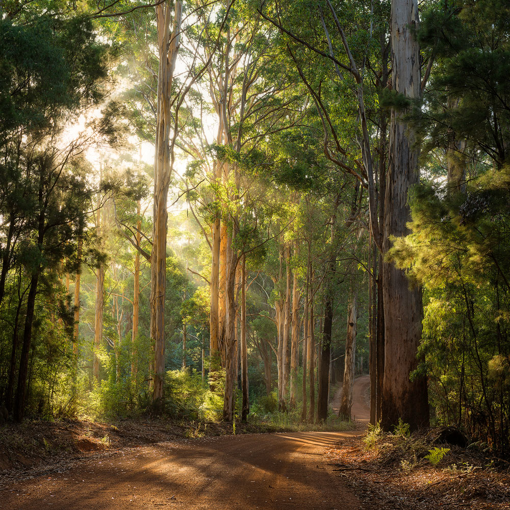 PEM02a/LE - Pemberton Forest
