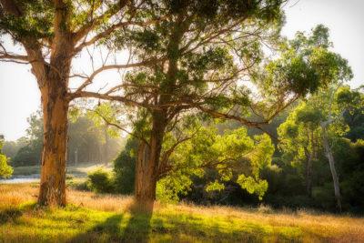 Pemberton Forest WA photography