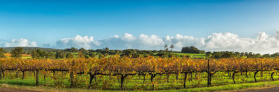 Vineyard Margaret River Photos
