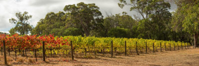 Vineyard Margaret River image