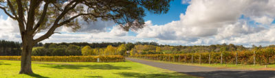 Howard Park Wines Margaret River photography