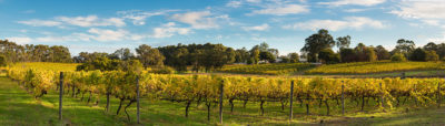 Hay Shed Hill Vineyard Margaret River photo