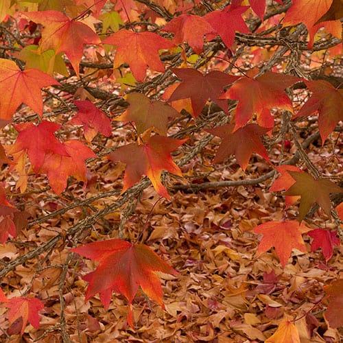 Margaret River Autumn Colour
