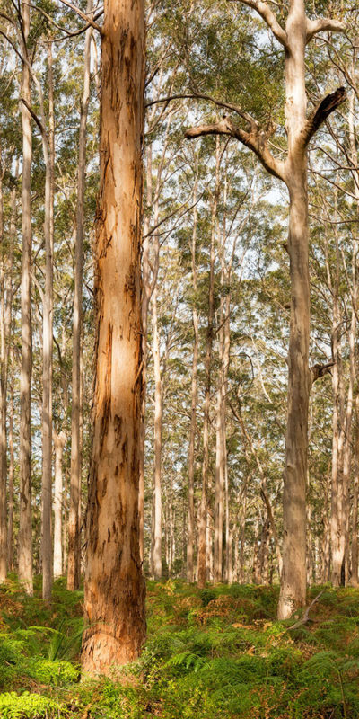 boranup forest photography