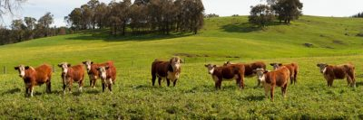 Southwest WA Farmland