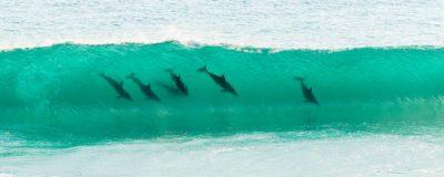 Dolphins Injidup