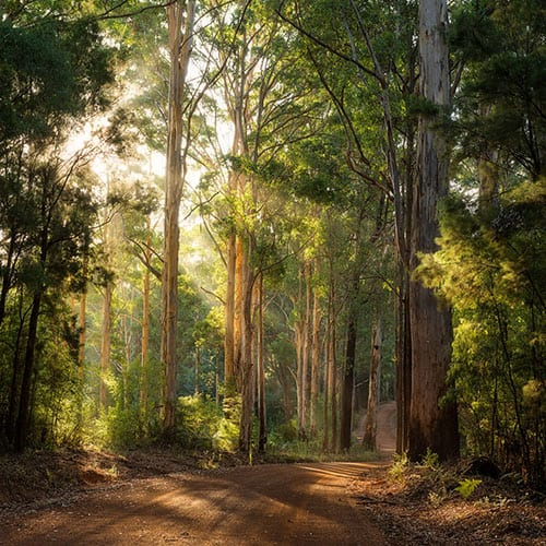 Pemberton Karri Forest