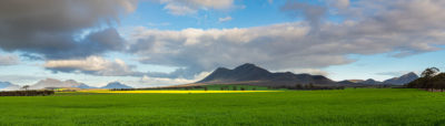 Canola at Stirling Ranges
