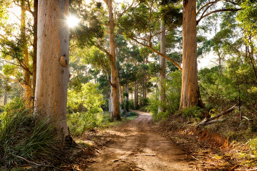 WAN11b - A Country Road, Walpole, Western Australia